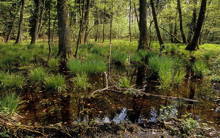 Ebersberger Forst Toteisloch