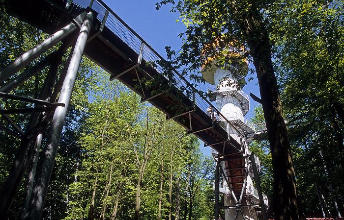 Nationalpark Hainich: Baumkronenpfad und Baumturm