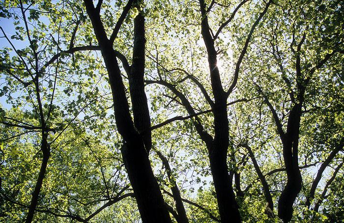 Nationalpark Hainich: Baumkronenpfad