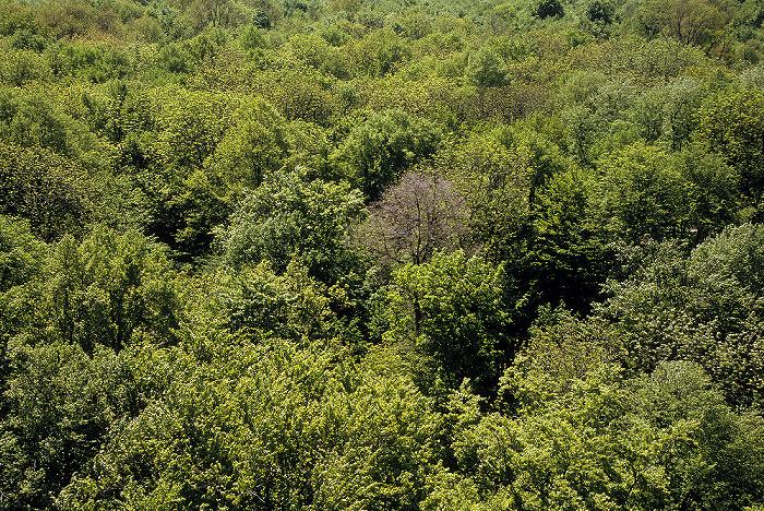 Nationalpark Hainich: Blick vom Baumturm des Baumkronenpfades