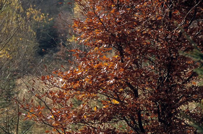 Fünfseenland Zwischen Possenhofen und Andechs: Herbstlicher Wald