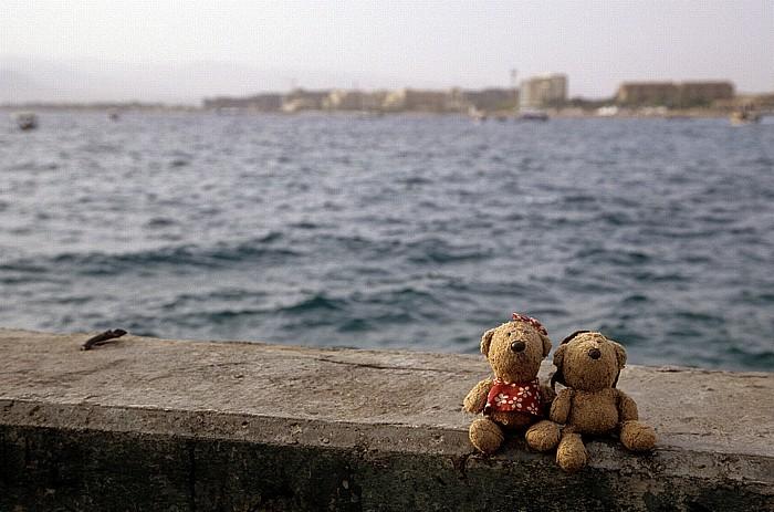 Rotes Meer (Golf von Aqaba): Teddine und Teddy