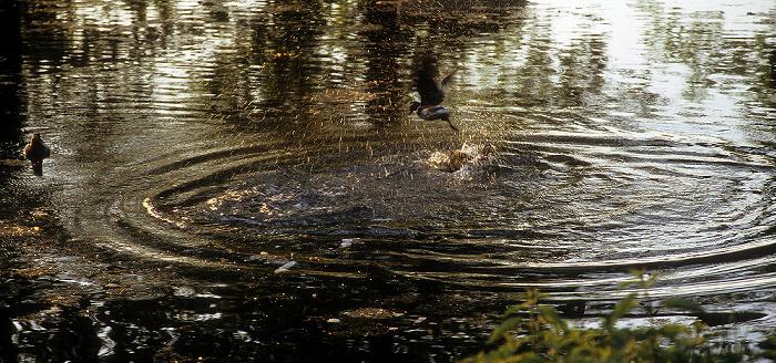 Dresden Schlosspark Pillnitz: Teich im Englischen Garten