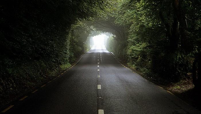County Wexford R733: Von Wexford westwärts