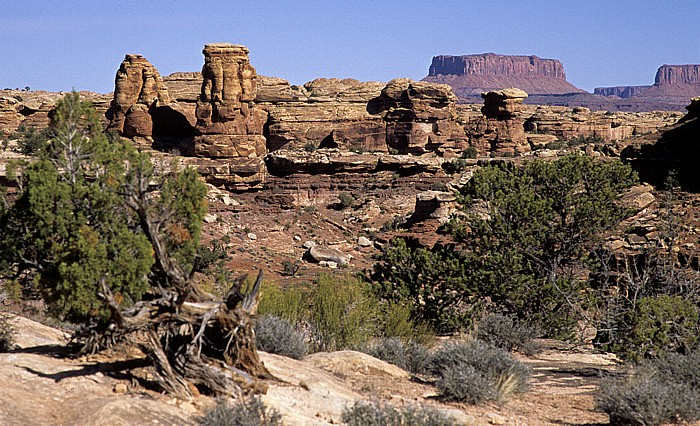 Canyonlands National Park The Needles Island in the Sky