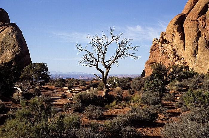 Vertrockneter Baum Arches National Park