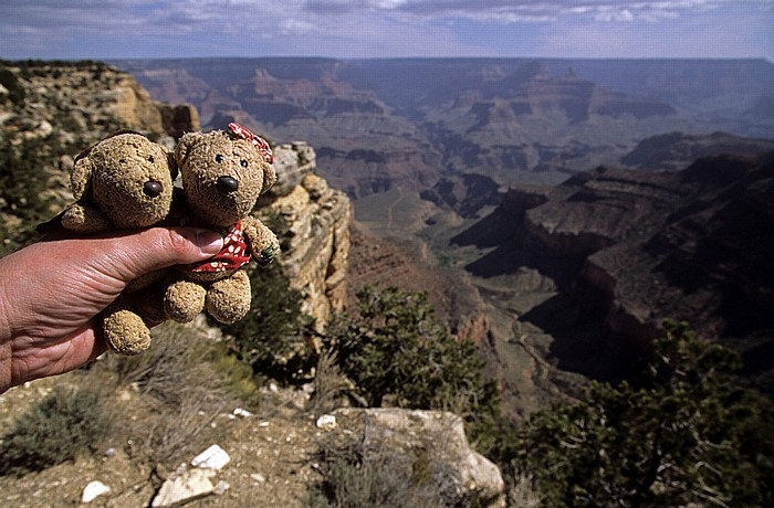 Grand Canyon National Park Trailview Overlook: Teddy und Teddine Grand Canyon