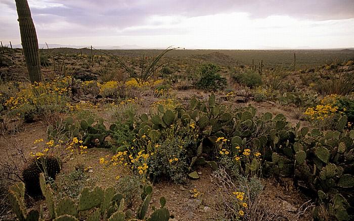 Rincon Mountain District Saguaro National Park
