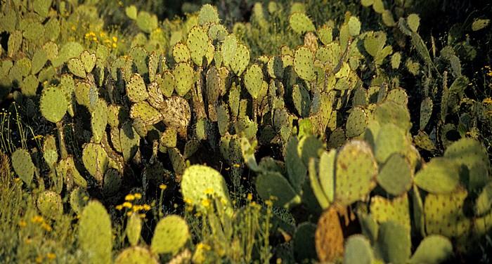 Rincon Mountain District: Kakteen Saguaro National Park