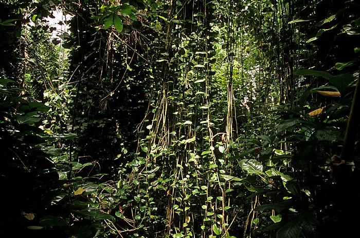 Oracle Biosphere 2: Urwald