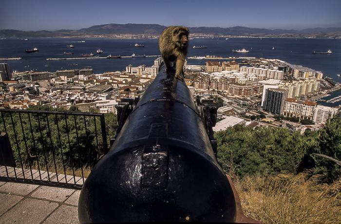 Fels von Gibraltar: Berberaffe Bay of Gibraltar