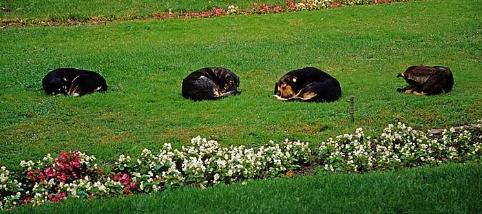Bukarest Cismigiu-Park (Gradina Cismigiu): Schlafende Hunde
