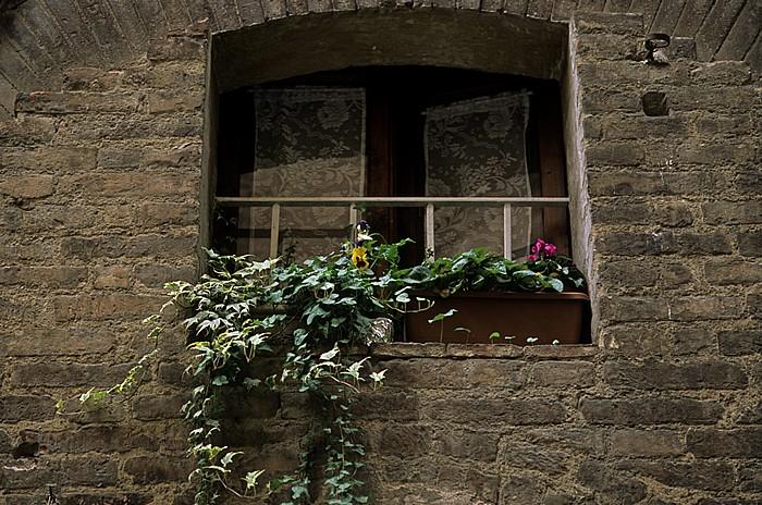 Siena Contrada de la Selva