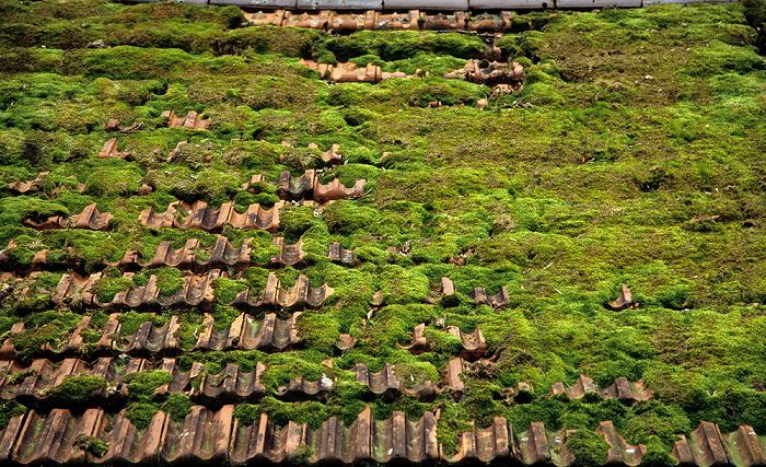 Kochelsee Moosbedecktes Dach