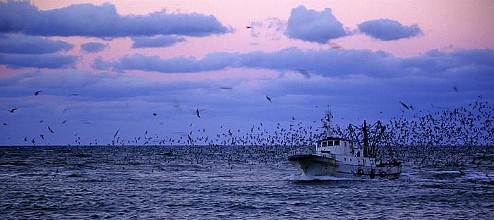 Trani Adria: Zurückkehrendes Fischerboot