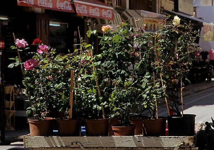 Türkische Altstadt: Blumenstand Nikosia