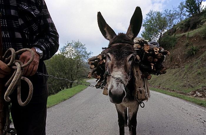 Kourdali Troodos-Gebirge: Esel