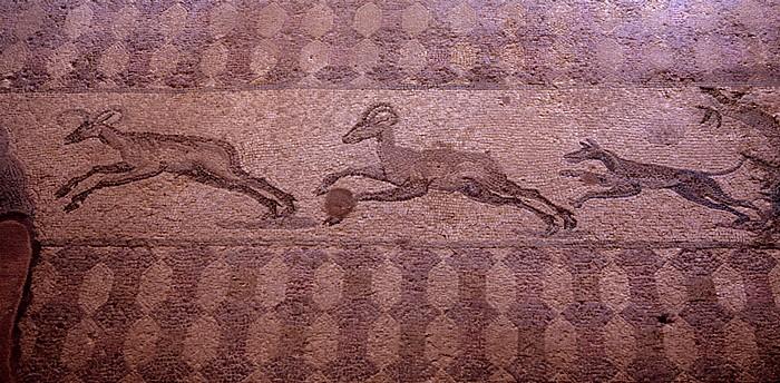 Paphos Archäologischer Park: Haus des Dionysos: Mosaik