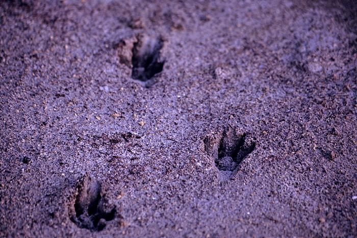 Larnaka Salzsee: Tierspuren im Sand