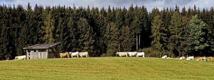 Fünfseenland Zwischen Possenhofen und Andechs