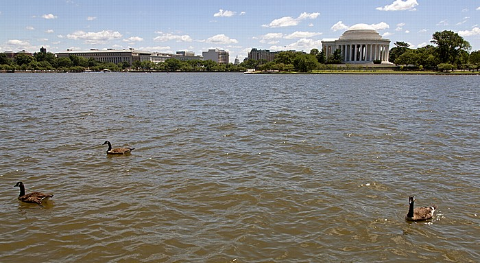Washington, D.C. West Potomac Park: Tidal Basin und Jefferson Memorial Kapitol Southwest Federal Center