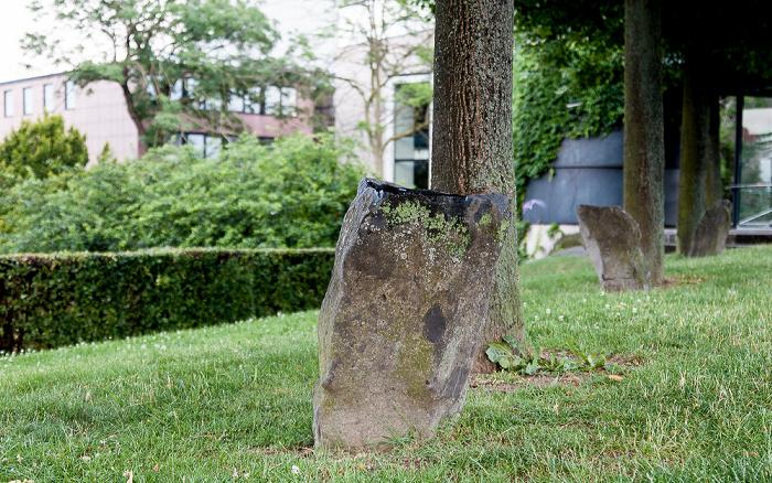 Kassel Eichen mit Basaltsteinen, Teil des Projektes 7000 Eichen (von Joseph Beuys) - documenta 7