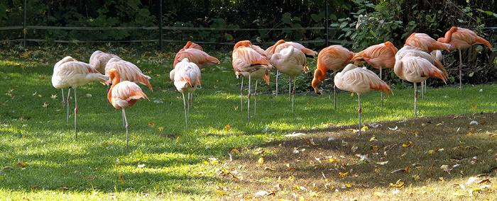 Karlsruhe Zoologischer Stadtgarten: Flamingos Zoologischer Garten