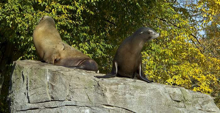 Karlsruhe Zoologischer Stadtgarten: Seelöwen Zoologischer Garten