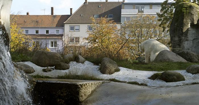 Karlsruhe Zoologischer Stadtgarten: Eisbär Zoologischer Garten
