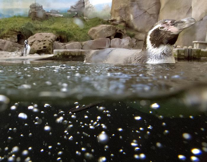 Karlsruhe Zoologischer Stadtgarten: Pinguin Zoologischer Garten