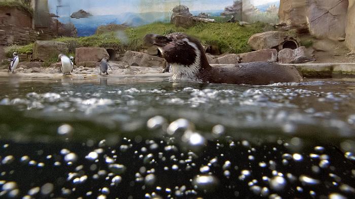 Karlsruhe Zoologischer Stadtgarten: Pinguine Zoologischer Garten