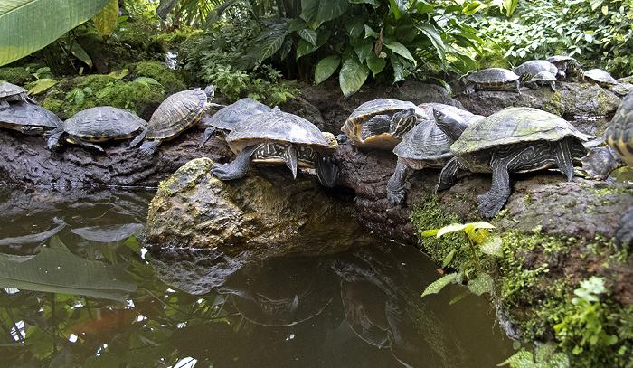München Botanischer Garten Nymphenburg: Orchideenhaus - Sumpfschildkröten