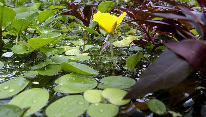 München Botanischer Garten Nymphenburg: Wasserpflanzenhaus