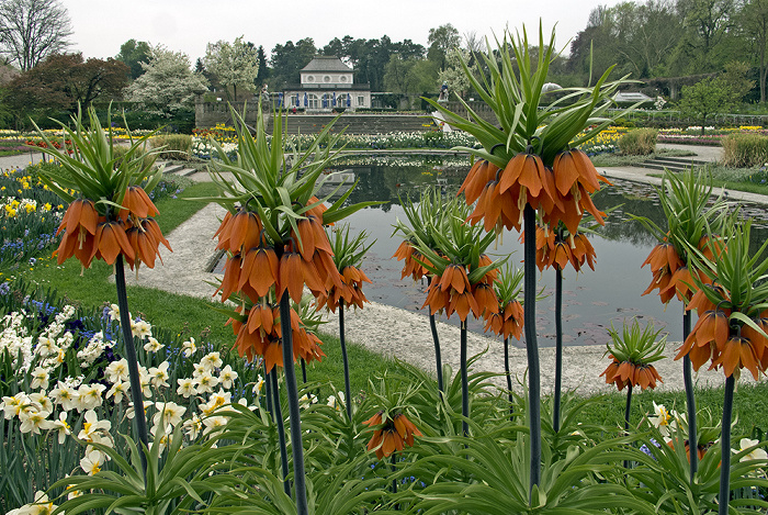 München Botanischer Garten Nymphenburg: Schmuckhof