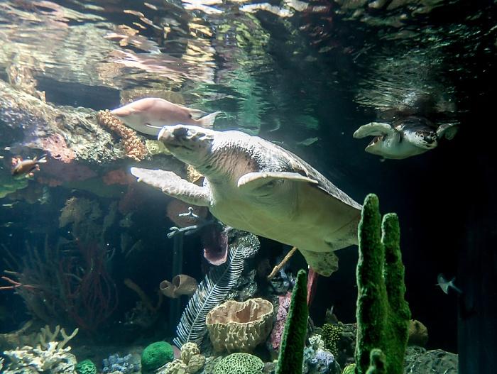 Oceanário de Lisboa: Meeresschildkröten Lissabon