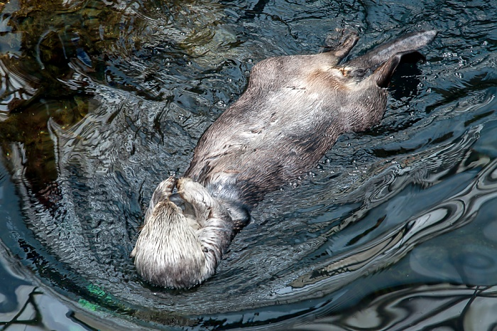 Oceanário de Lisboa: Otter Lissabon