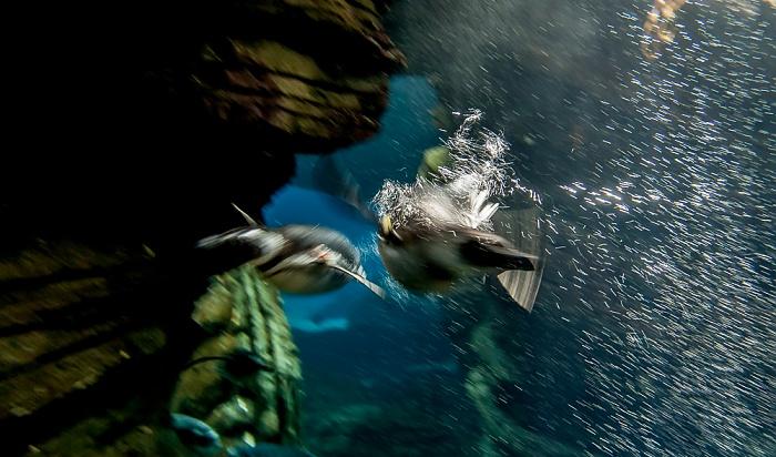 Oceanário de Lisboa: Tauchende Pinguine Lissabon