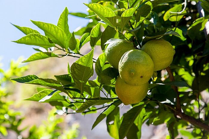 Limone sul Garda Historisches Treibhaus: Zitronen