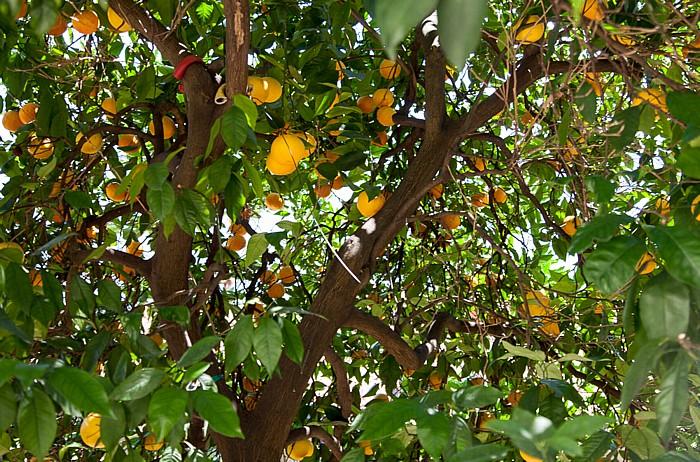 Limone sul Garda Historisches Treibhaus: Orangen