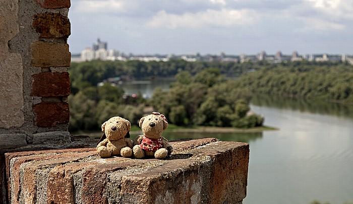 Festung von Belgrad: Kalemegdan - Teddy und Teddine Donau Große Kriegsinsel Novi Beograd Save