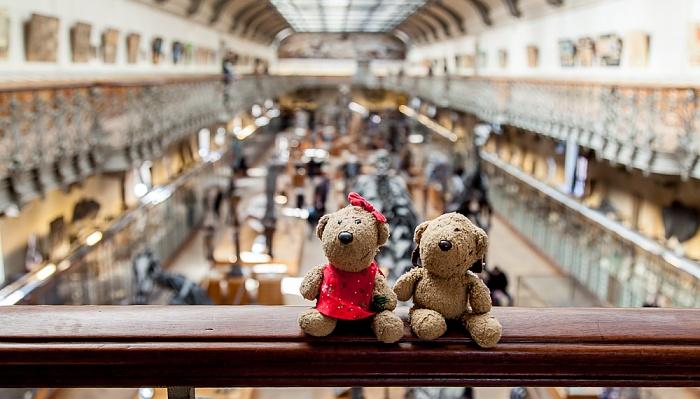 Paris Muséum national d'histoire naturelle (Galerie de Paléontologie et d'Anatomie Comparée): Teddine und Teddy