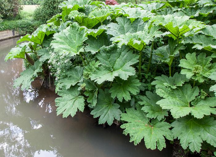 Burwash Bateman's (Alterswohnsitz des Schriftstellers Rudyard Kipling): Garten, River Dudwell