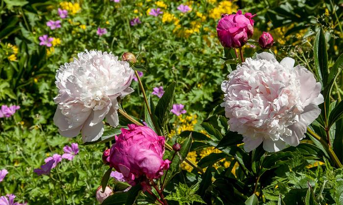 Chichester Garten des Bischofspalastes