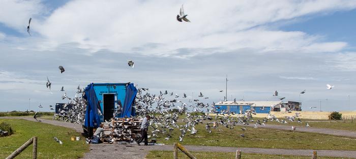 Isle of Portland Auflassort mit Kabinenexpress: Start der Brieftauben