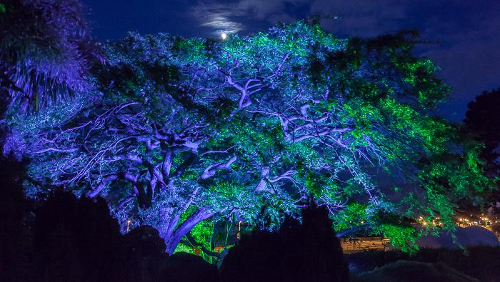 Torquay Abbey Park: Blaubeleuchteter Baum