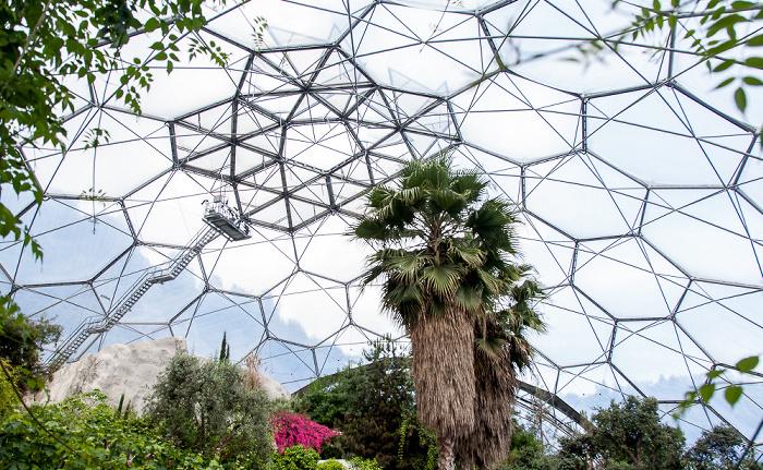 St Blazey Eden Project: Mediterranean Biome