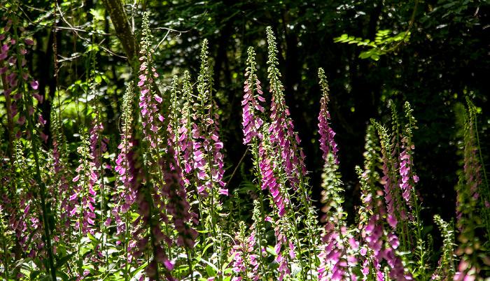 Mevagissey Lost Gardens of Heligan