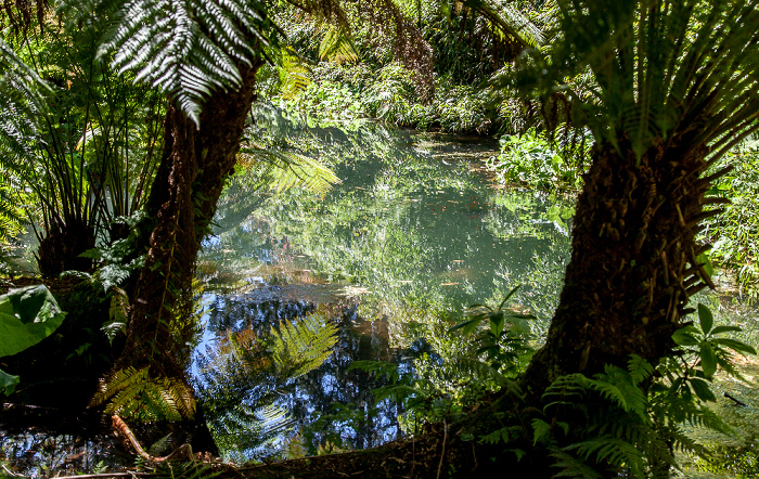Mevagissey Lost Gardens of Heligan: The Jungle