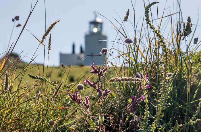 Lizard Lizard Lighthouse