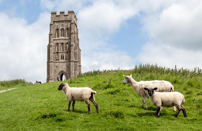 Glastonbury Tor: St Michael's Tower, Schafe